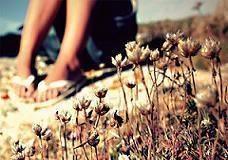 summer-6